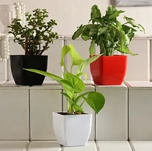 Set Of 3 Green Foliage Plants