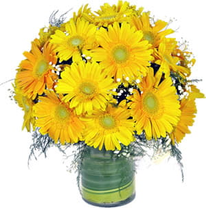 Glass vase of Gerberas with Gypsophilia to bright someone's day.600.jpg