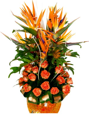 A designer arrangement of Birds of Paradise and Orange Roses arranged in a glass vase, to bring paradise on earth.1800.jpg